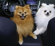 Jack e Fred  participam de ensaio para divulgar a  nova campanha da Brizza Mitsubishi
